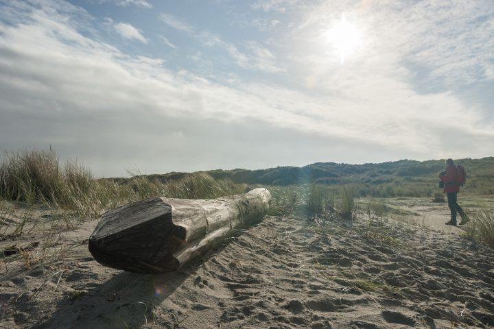 Baumstaumm (Strandgut) am Strand (Ostspitze) von Juist